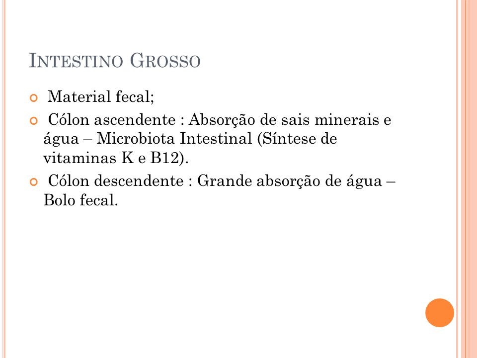 Intestino Grosso Material fecal;