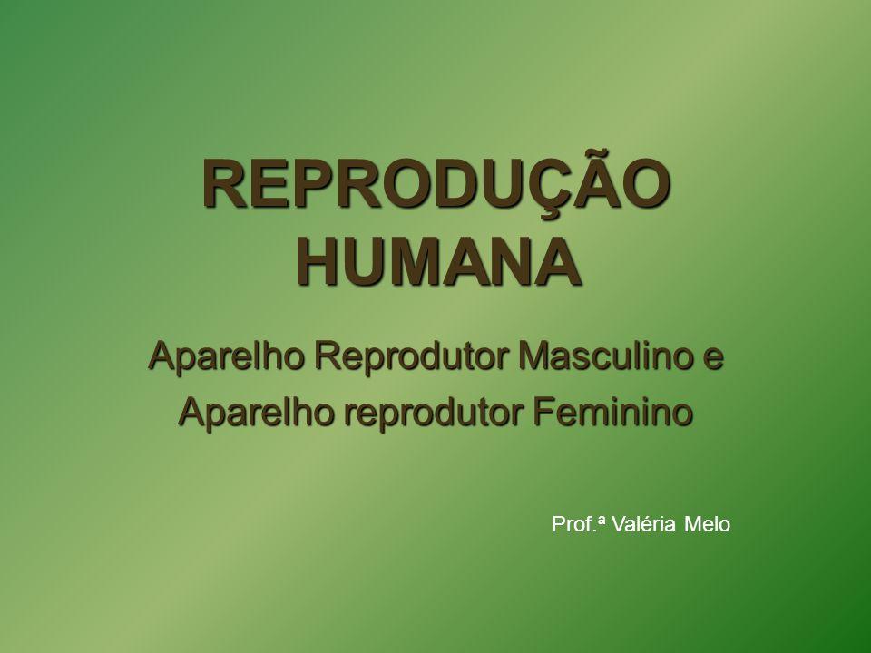Aparelho Reprodutor Masculino e Aparelho reprodutor Feminino