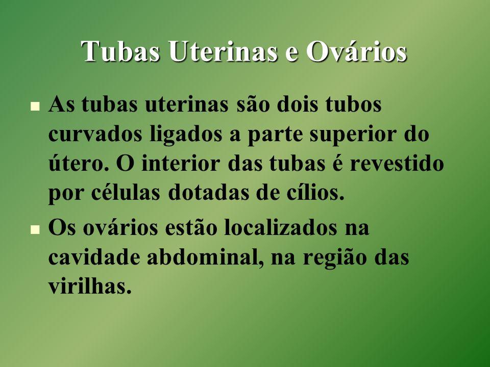 Tubas Uterinas e Ovários