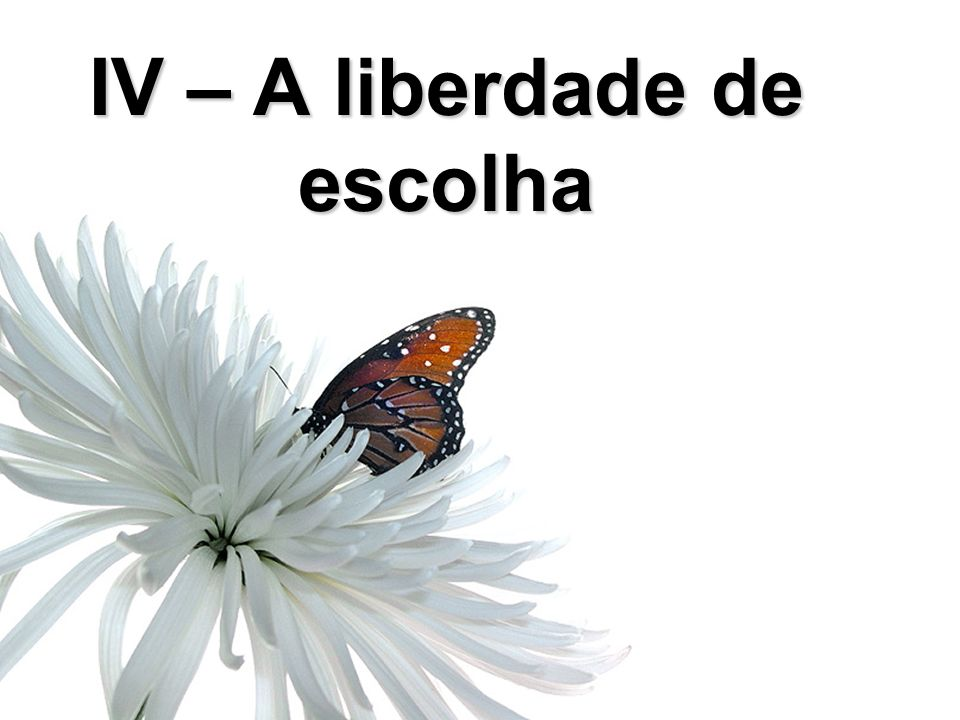 IV – A liberdade de escolha