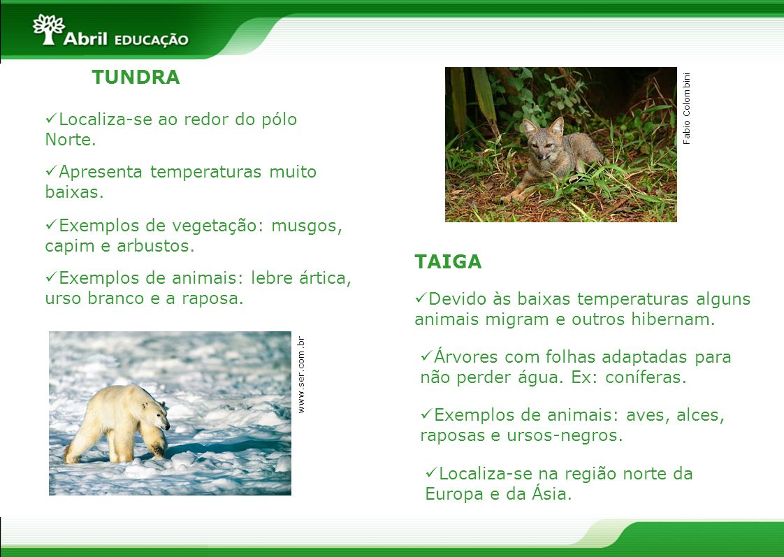 TUNDRA TAIGA Localiza-se ao redor do pólo Norte.