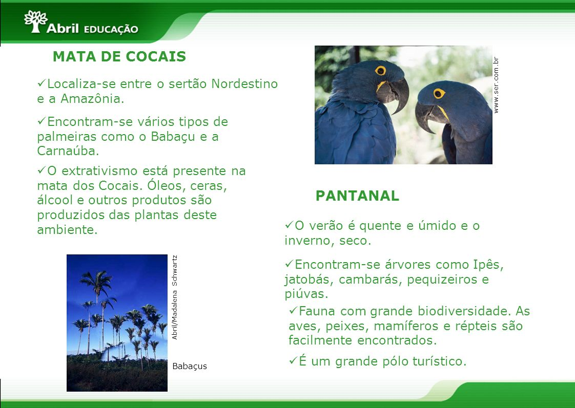 MATA DE COCAIS PANTANAL