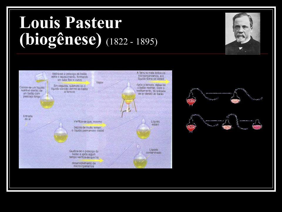 Louis Pasteur (biogênese) (1822 - 1895)