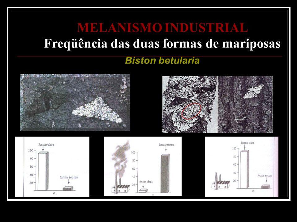 MELANISMO INDUSTRIAL Freqüência das duas formas de mariposas Biston betularia