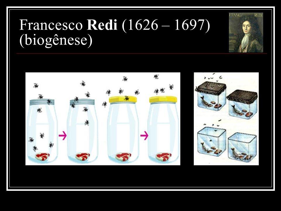 Francesco Redi (1626 – 1697) (biogênese)