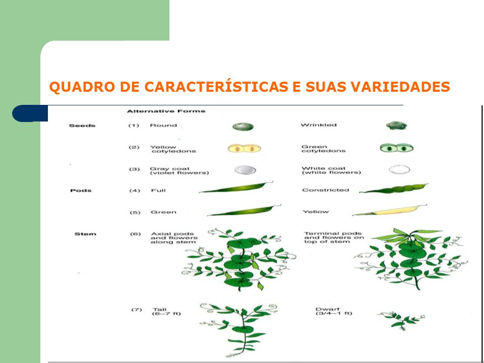 QUADRO DE CARACTERÍSTICAS E SUAS VARIEDADES