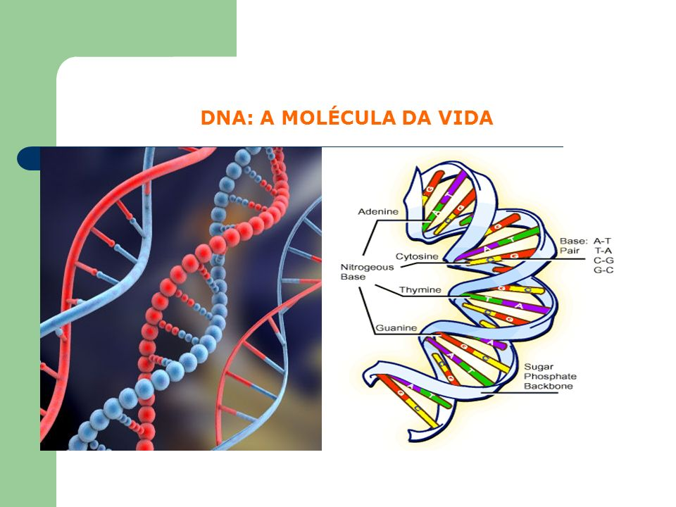 DNA: A MOLÉCULA DA VIDA