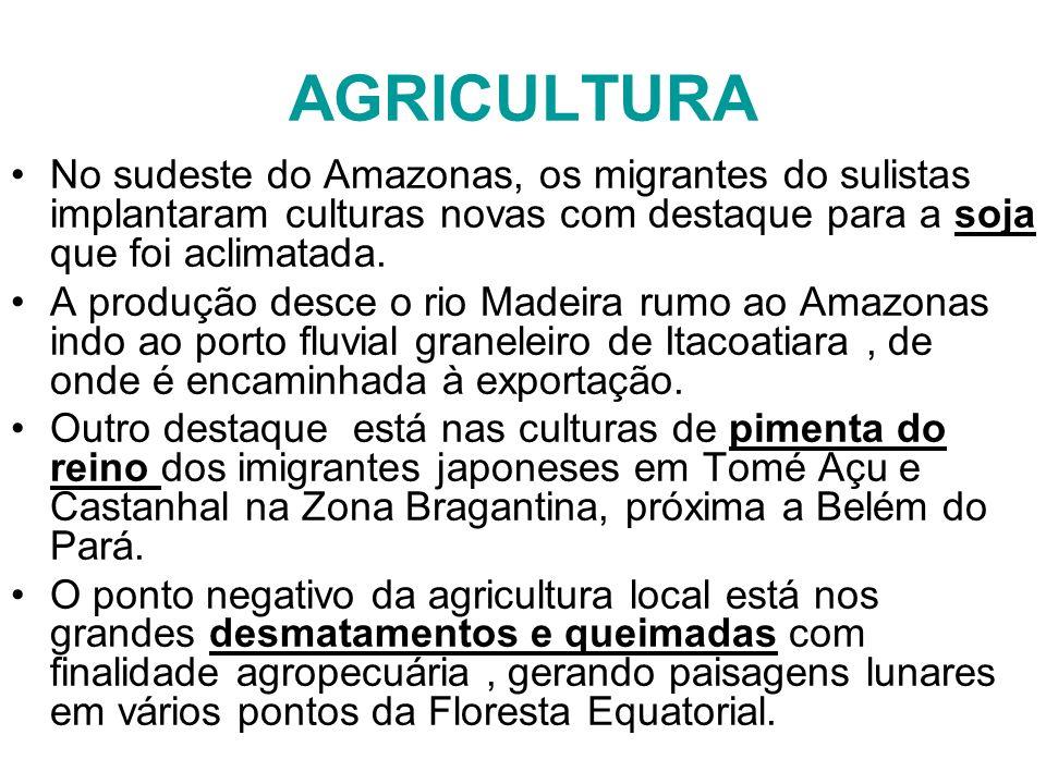 AGRICULTURA No sudeste do Amazonas, os migrantes do sulistas implantaram culturas novas com destaque para a soja que foi aclimatada.
