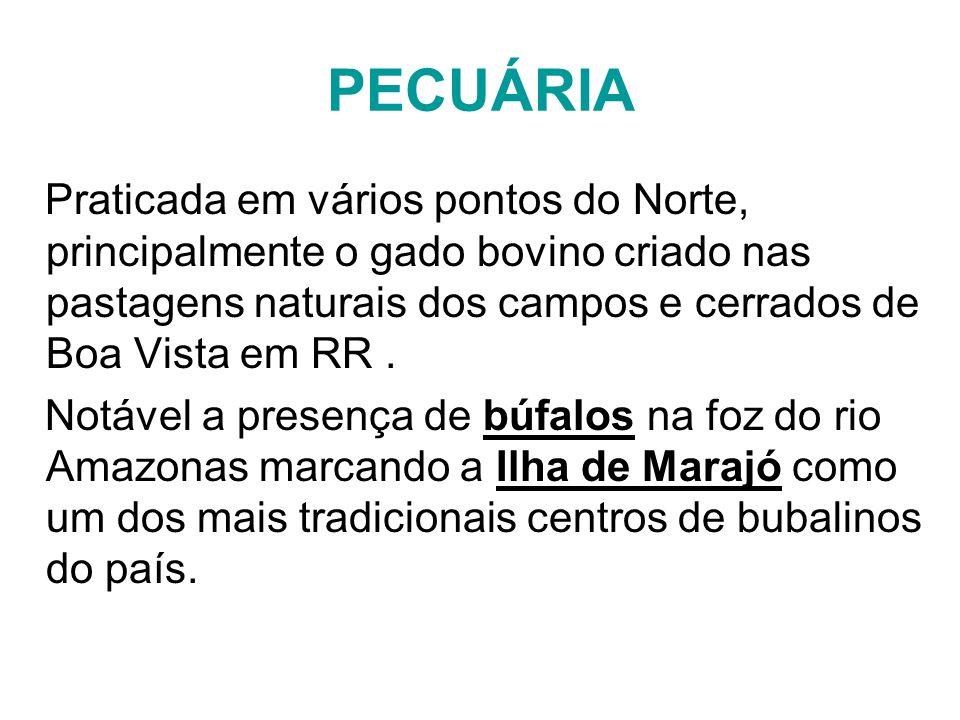 PECUÁRIA Praticada em vários pontos do Norte, principalmente o gado bovino criado nas pastagens naturais dos campos e cerrados de Boa Vista em RR .