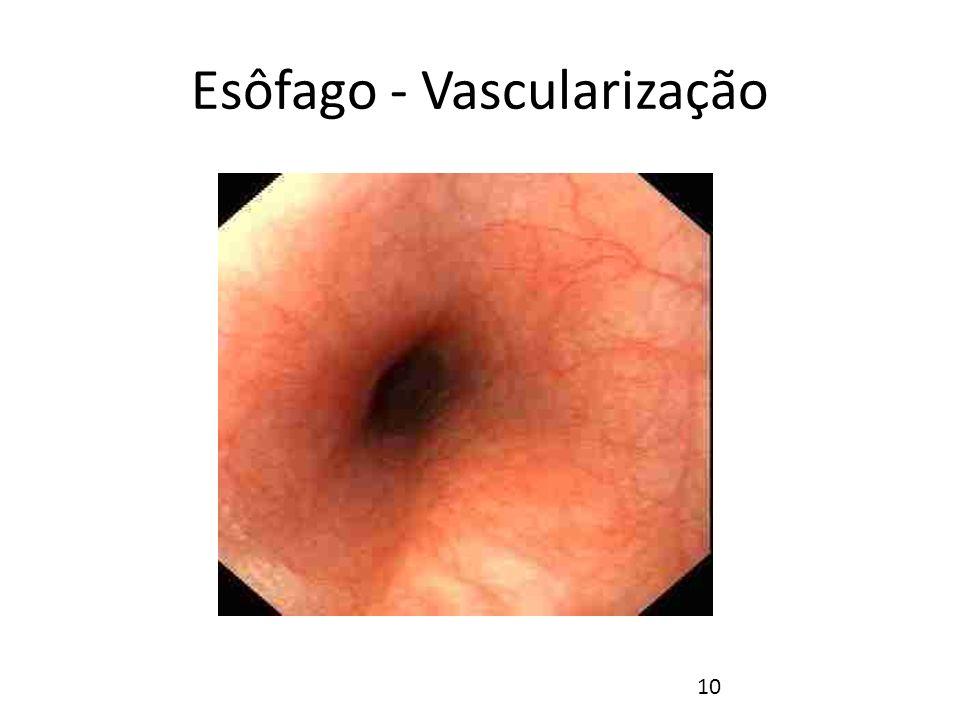 Esôfago - Vascularização