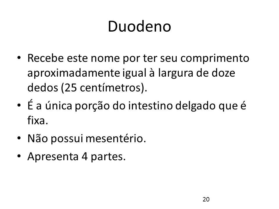 Duodeno Recebe este nome por ter seu comprimento aproximadamente igual à largura de doze dedos (25 centímetros).