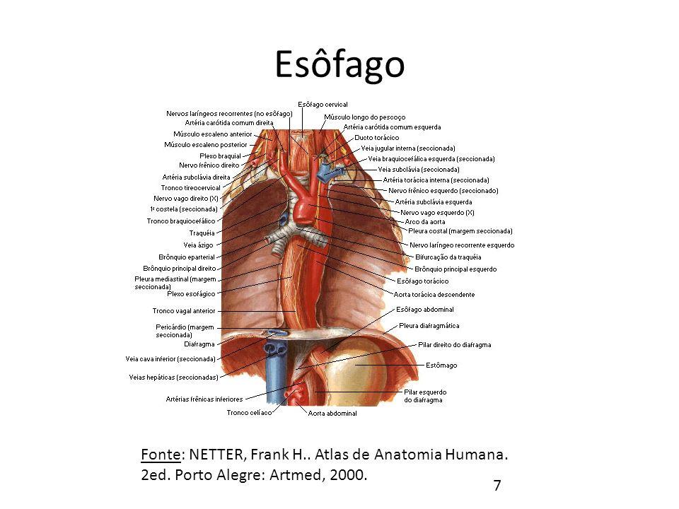 Esôfago Fonte: NETTER, Frank H.. Atlas de Anatomia Humana. 2ed. Porto Alegre: Artmed, 2000.