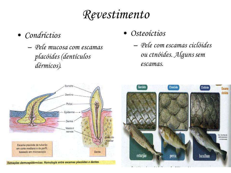 Revestimento Osteoíctios Condríctios