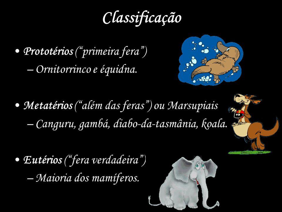 Classificação Prototérios ( primeira fera ) Ornitorrinco e équidna.