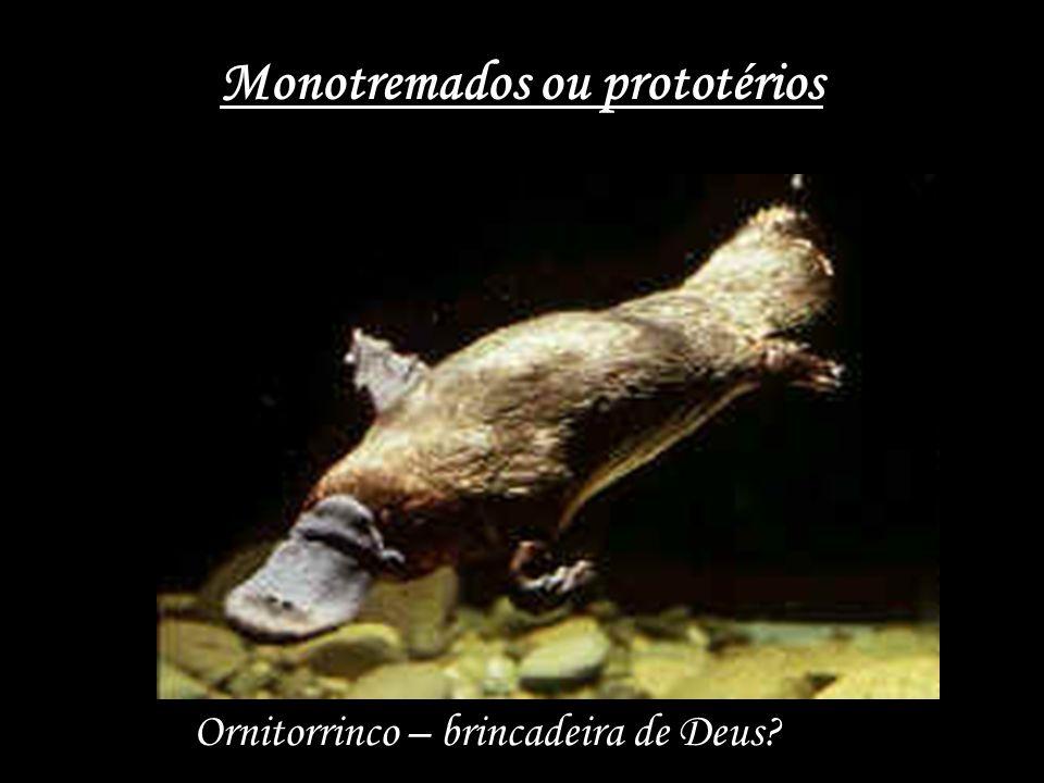 Monotremados ou prototérios