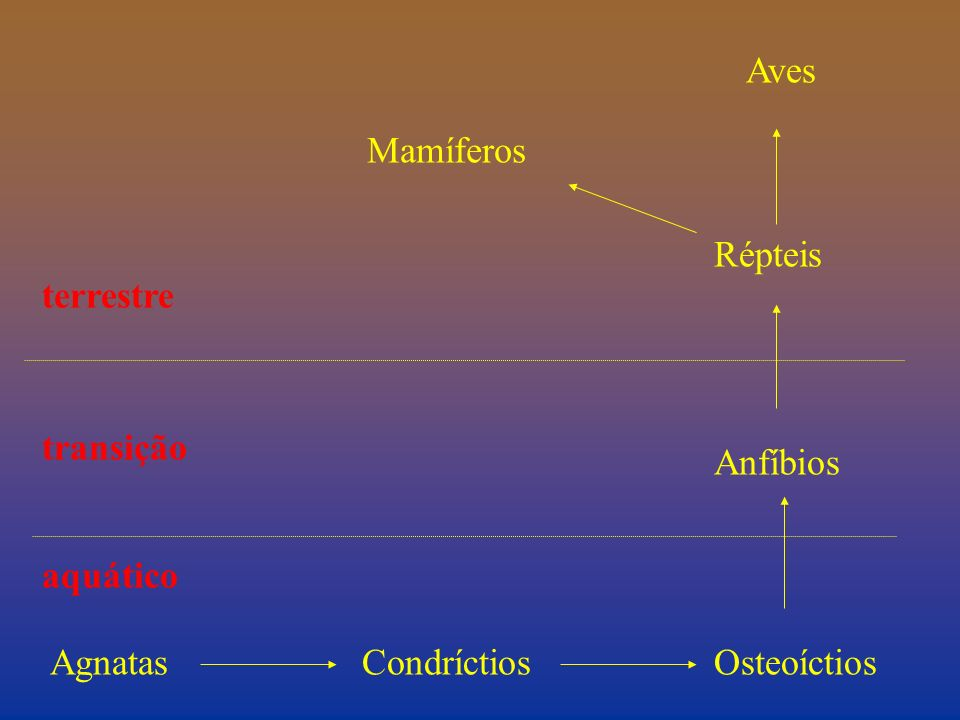 Aves Mamíferos Répteis terrestre transição Anfíbios aquático Agnatas Condríctios Osteoíctios