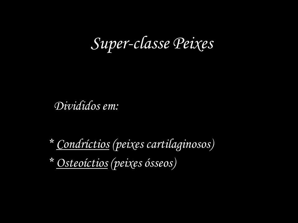 Super-classe Peixes Divididos em: