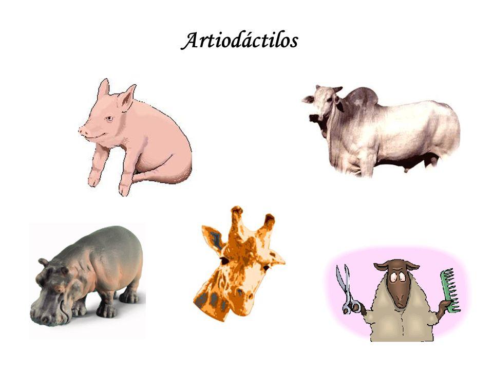 Artiodáctilos