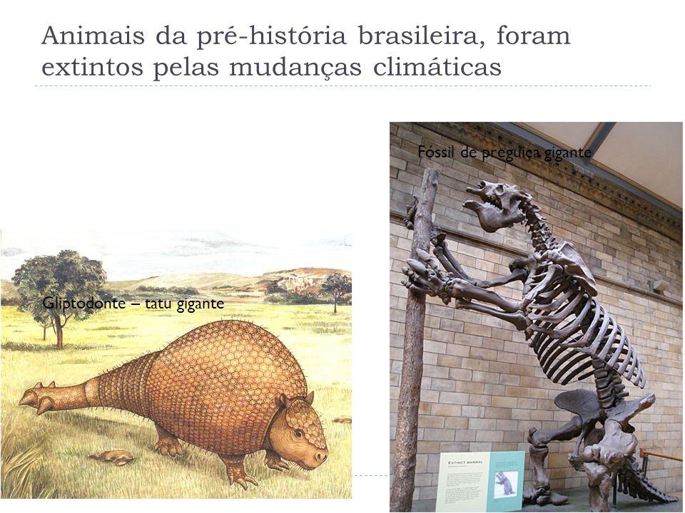 Animais da pré-história brasileira, foram extintos pelas mudanças climáticas
