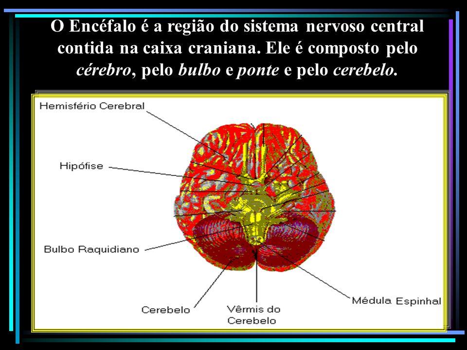 O Encéfalo é a região do sistema nervoso central contida na caixa craniana.