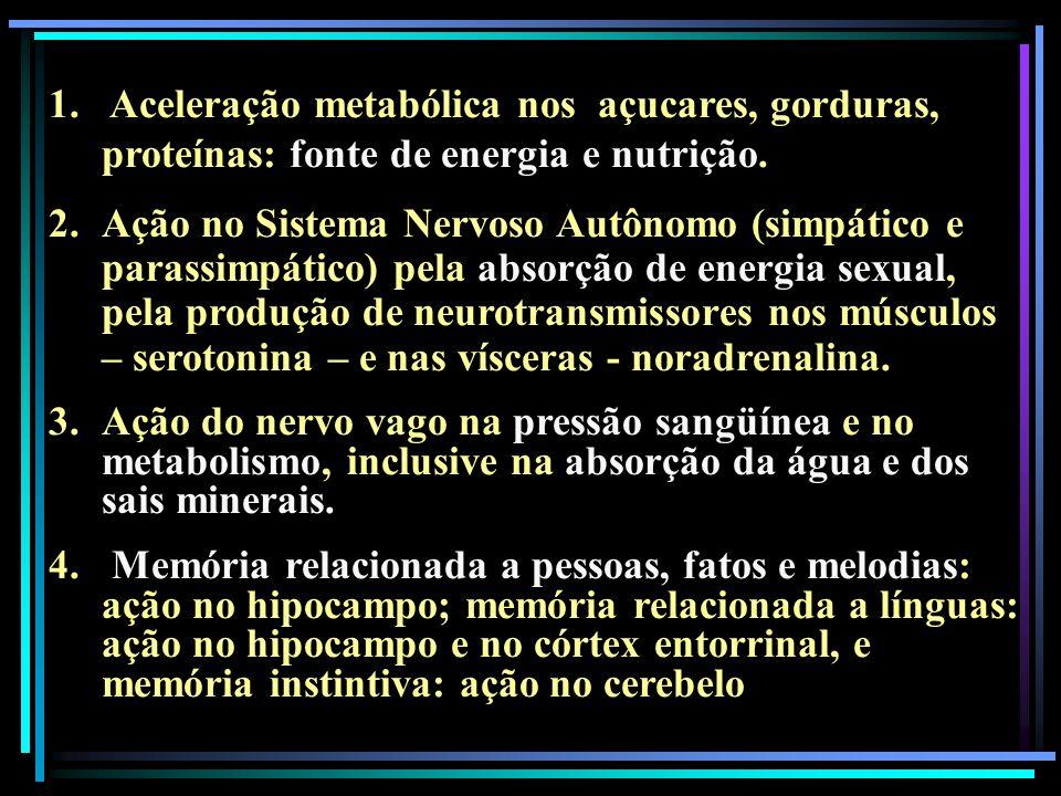 Aceleração metabólica nos açucares, gorduras, proteínas: fonte de energia e nutrição.
