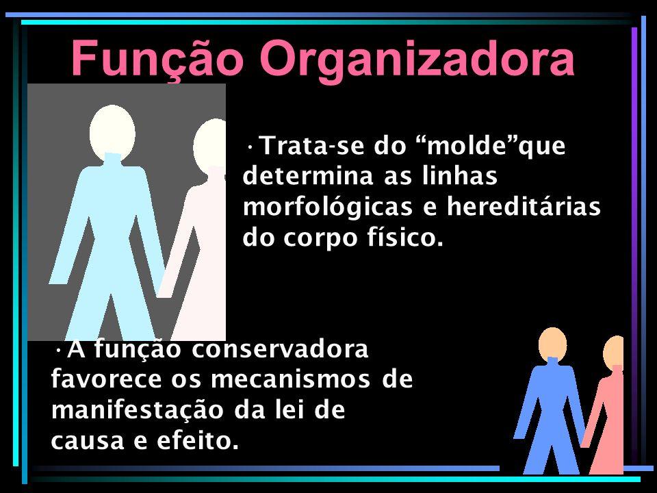 Função Organizadora Trata-se do molde que determina as linhas morfológicas e hereditárias do corpo físico.