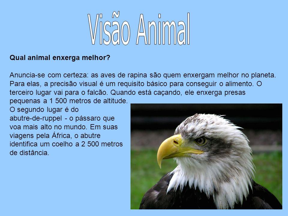 Visão Animal Qual animal enxerga melhor