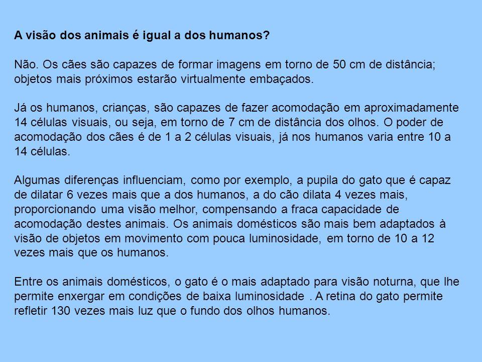 A visão dos animais é igual a dos humanos