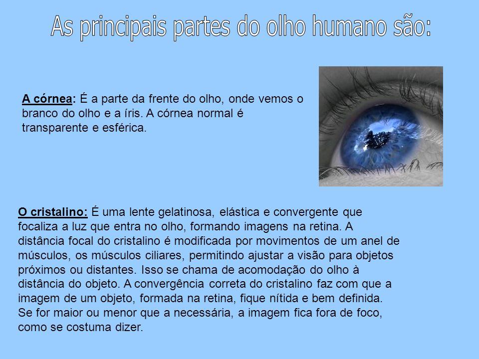 As principais partes do olho humano são: