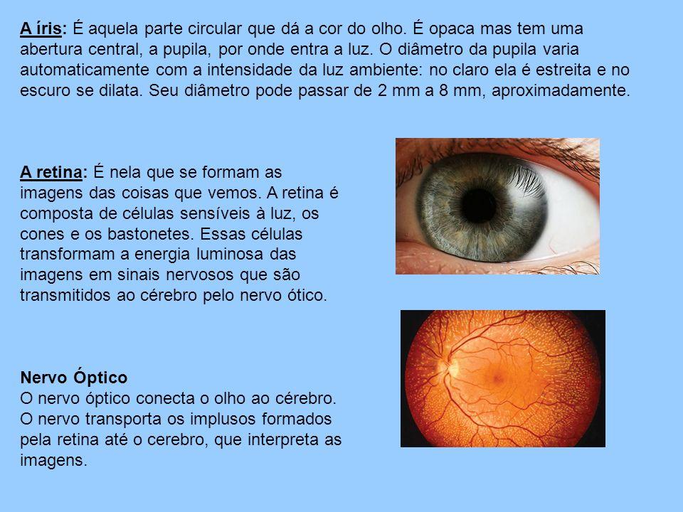 A íris: É aquela parte circular que dá a cor do olho