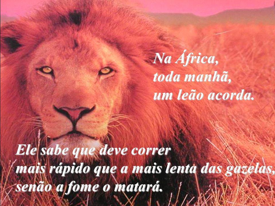 Na África,. toda manhã,. um leão acorda. Ele sabe que deve correr