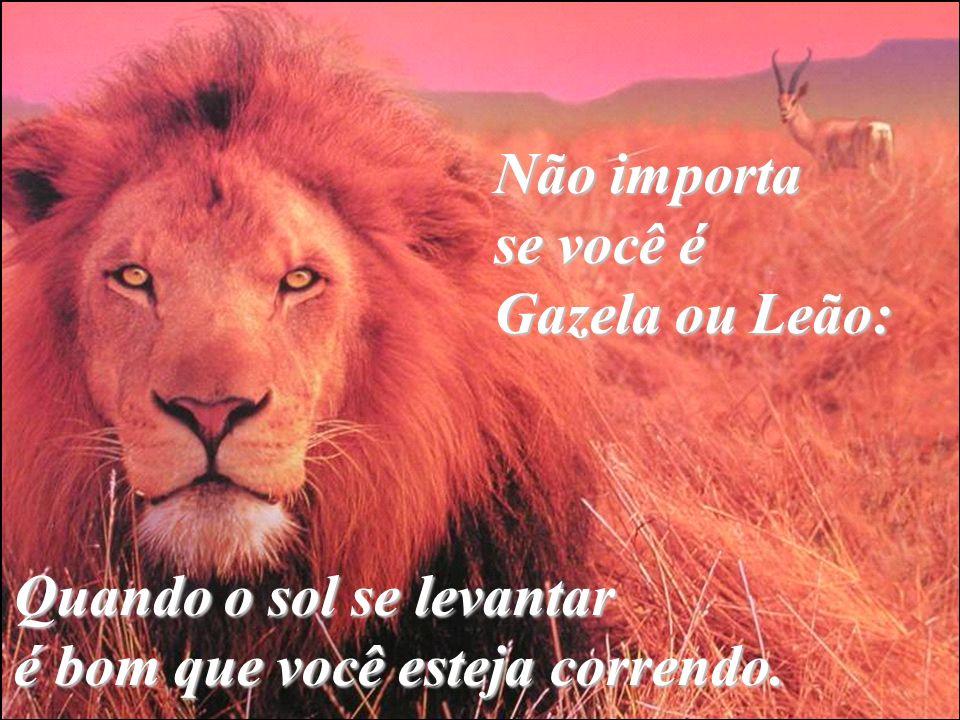 Não importa se você é Gazela ou Leão: Quando o sol se levantar é bom que você esteja correndo.