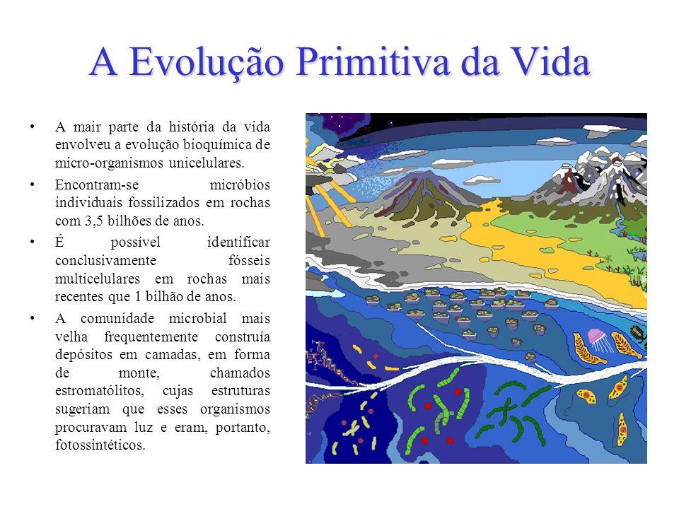 A Evolução Primitiva da Vida