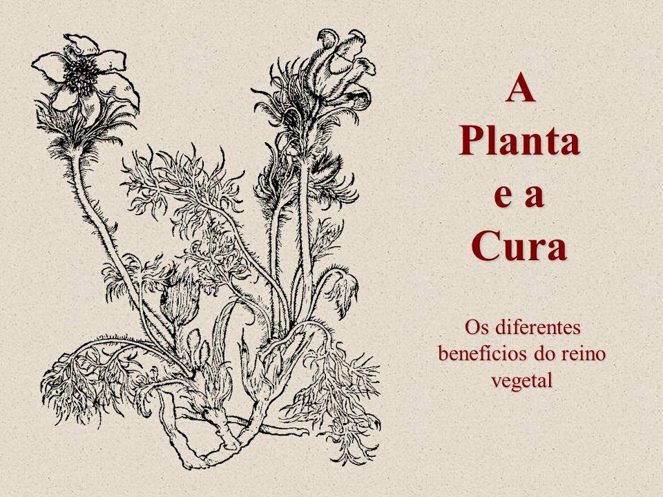 Os diferentes benefícios do reino vegetal