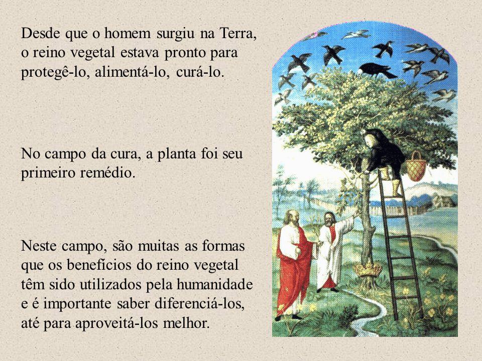 Desde que o homem surgiu na Terra, o reino vegetal estava pronto para protegê-lo, alimentá-lo, curá-lo.