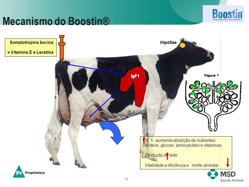 Mecanismo do Boostin® Somatotropina bovina + Vitamina E e Lecetina