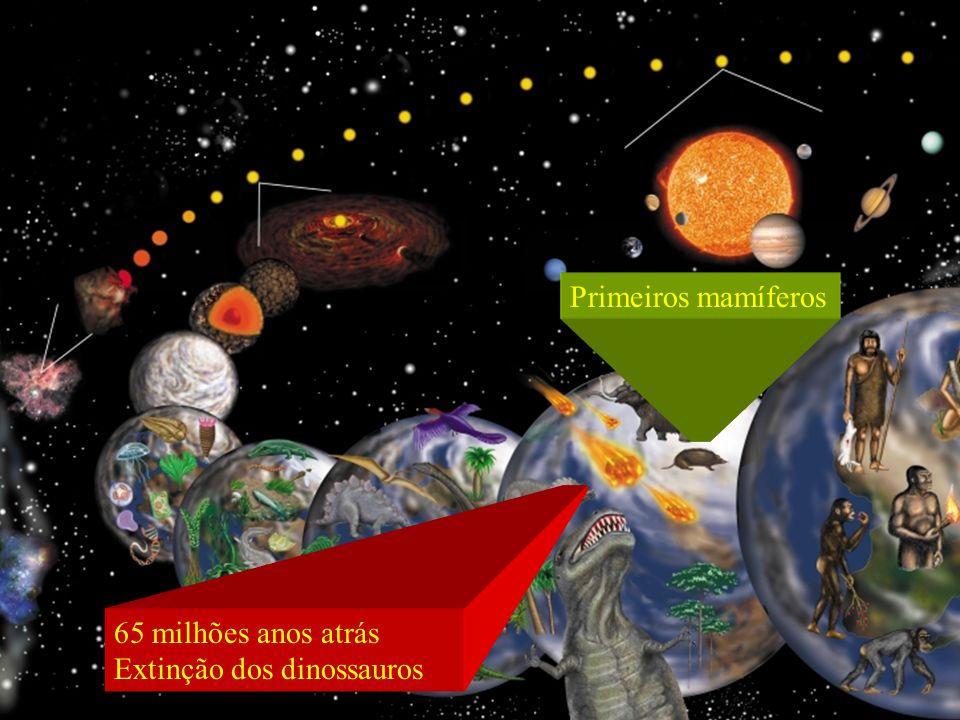 Primeiros mamíferos 65 milhões anos atrás Extinção dos dinossauros