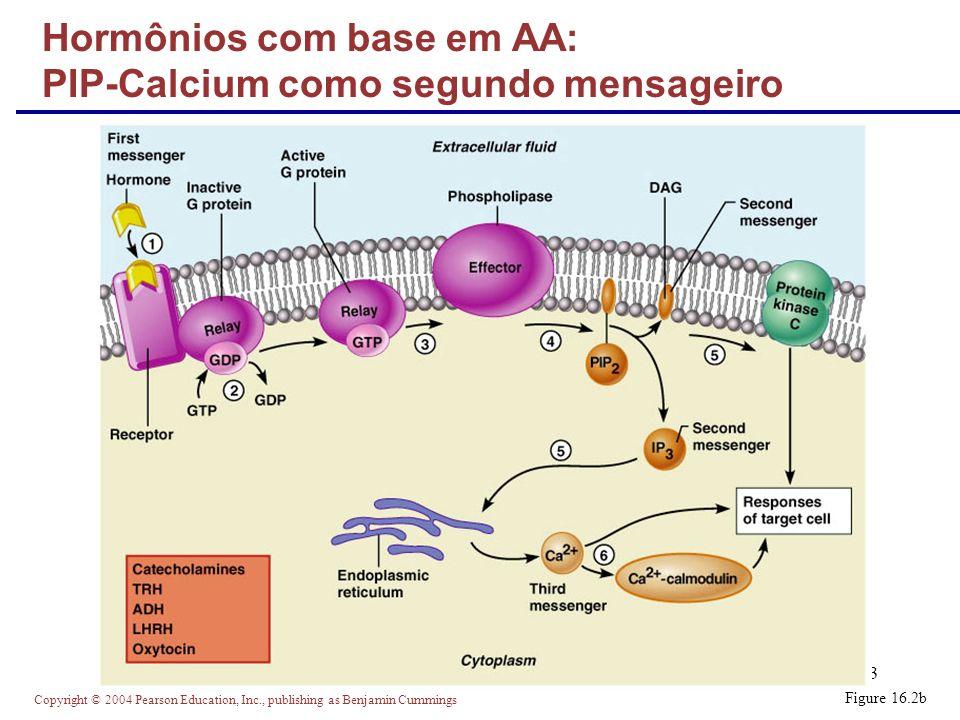 Hormônios com base em AA: PIP-Calcium como segundo mensageiro
