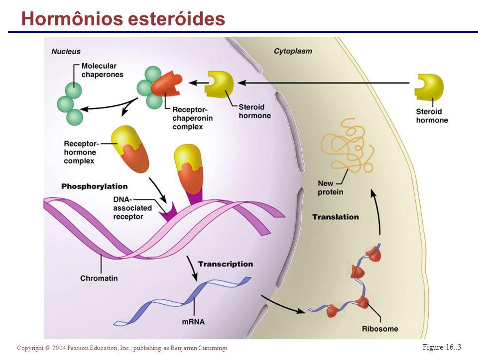 Hormônios esteróides Figure 16..3