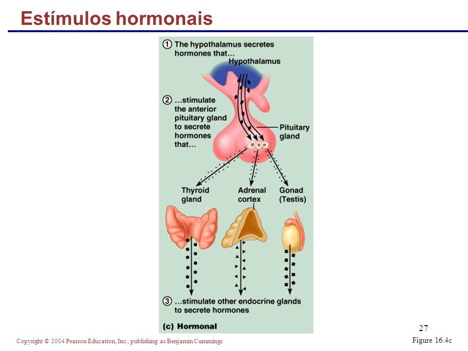 Estímulos hormonais Figure 16.4c