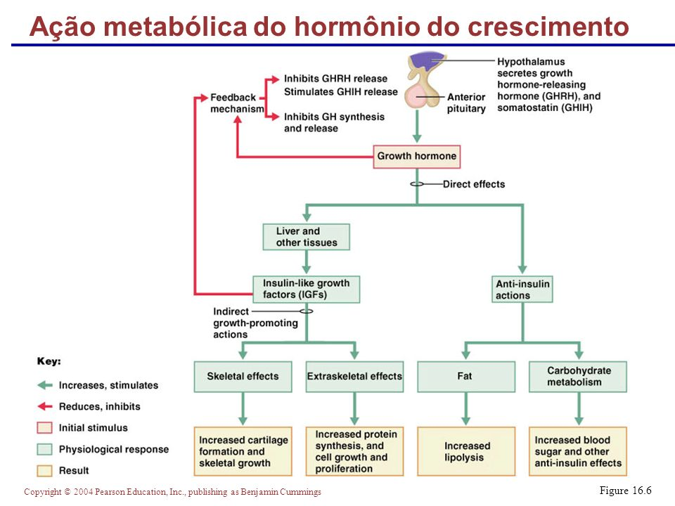 Ação metabólica do hormônio do crescimento