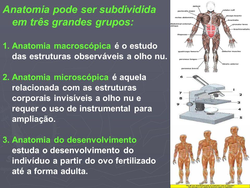 Anatomia pode ser subdividida em três grandes grupos: