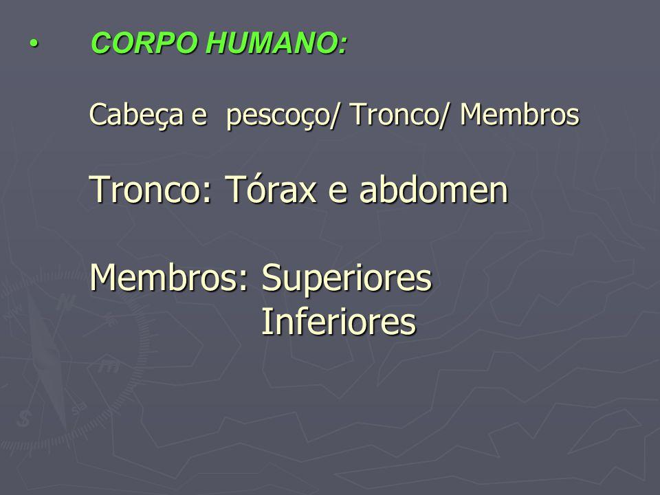 CORPO HUMANO: Cabeça e pescoço/ Tronco/ Membros