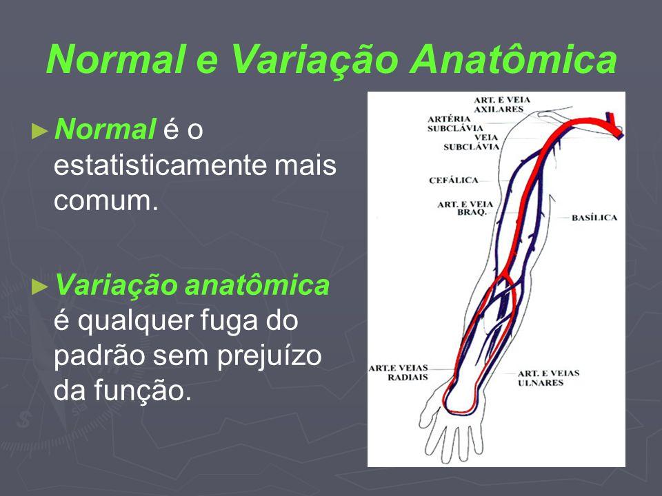Normal e Variação Anatômica