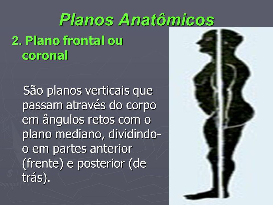 Planos Anatômicos 2. Plano frontal ou coronal