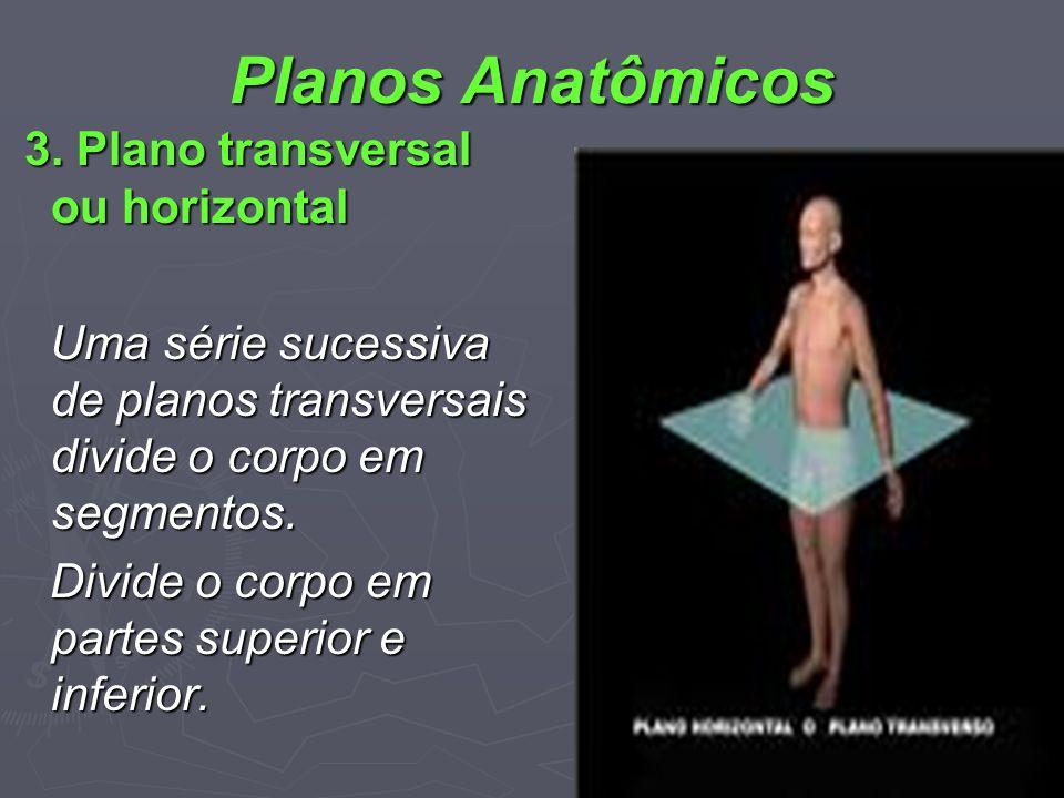Planos Anatômicos 3. Plano transversal ou horizontal