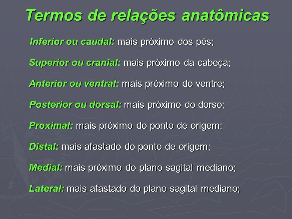 Termos de relações anatômicas