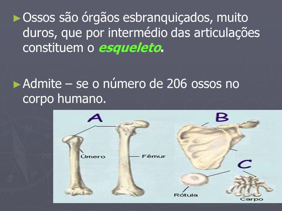Ossos são órgãos esbranquiçados, muito duros, que por intermédio das articulações constituem o esqueleto.