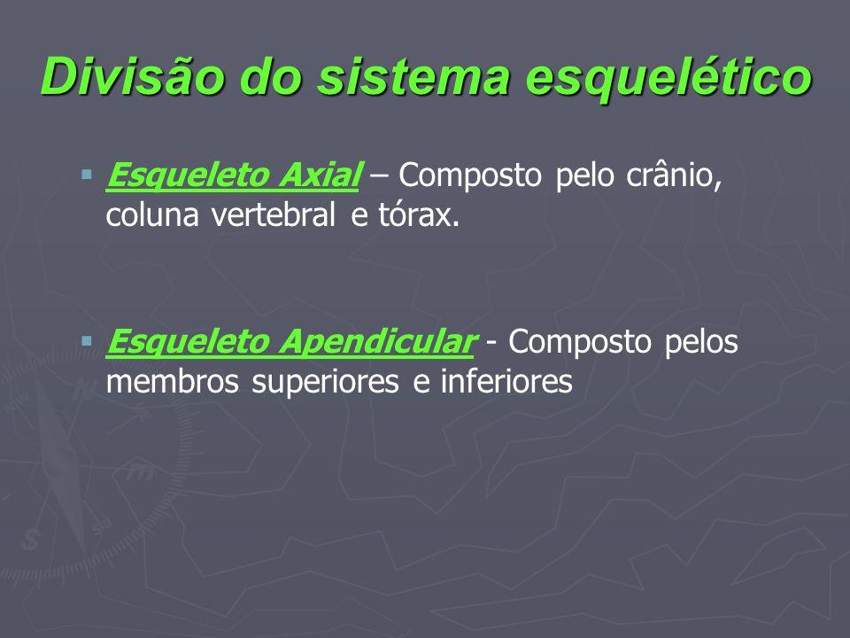 Divisão do sistema esquelético