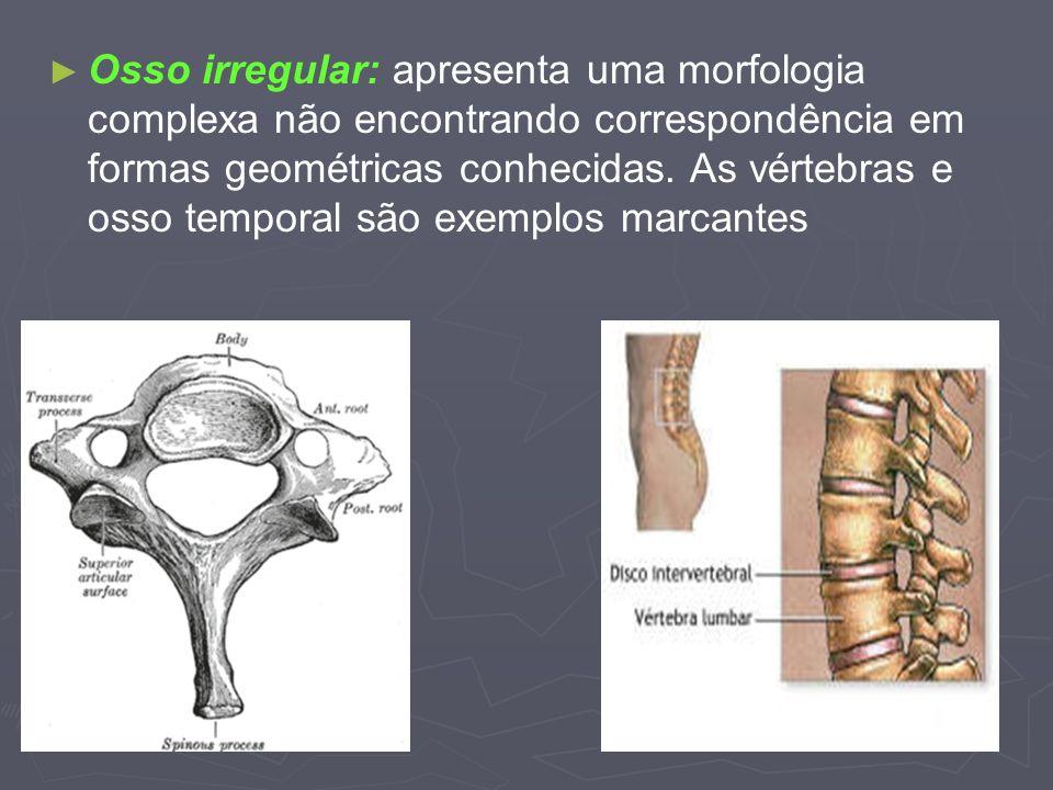 Osso irregular: apresenta uma morfologia complexa não encontrando correspondência em formas geométricas conhecidas.